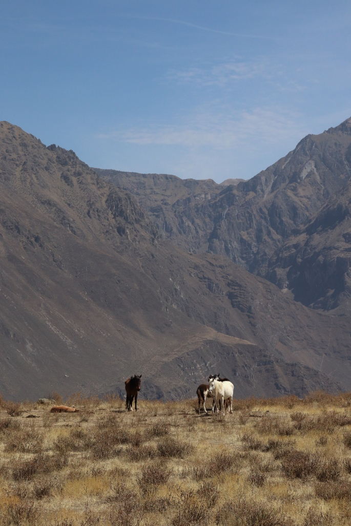Horses on the canyon